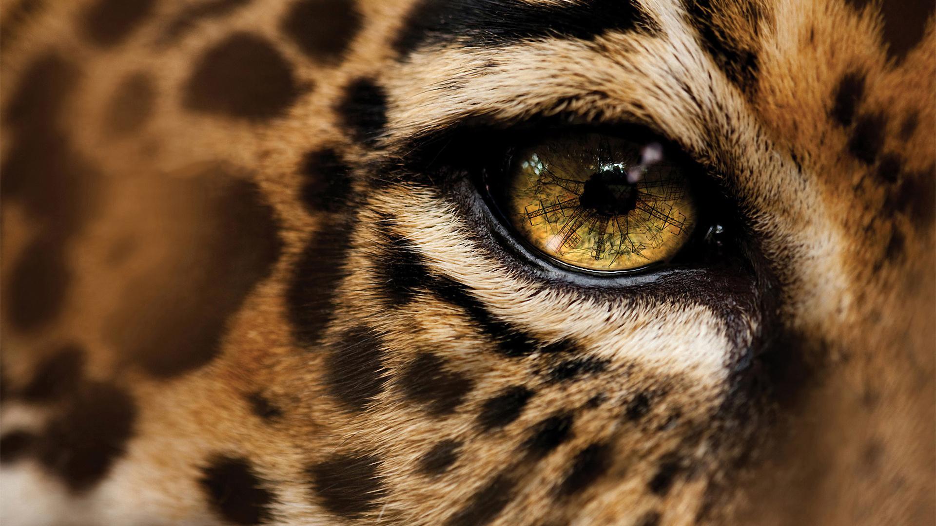 Cheetah-wallpapers-HD-pics-photos-download